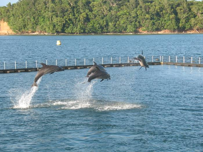 dolphins_jumping_in_tandum
