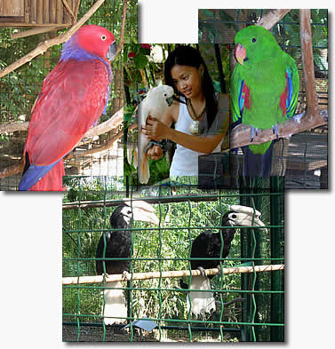 jest_birds