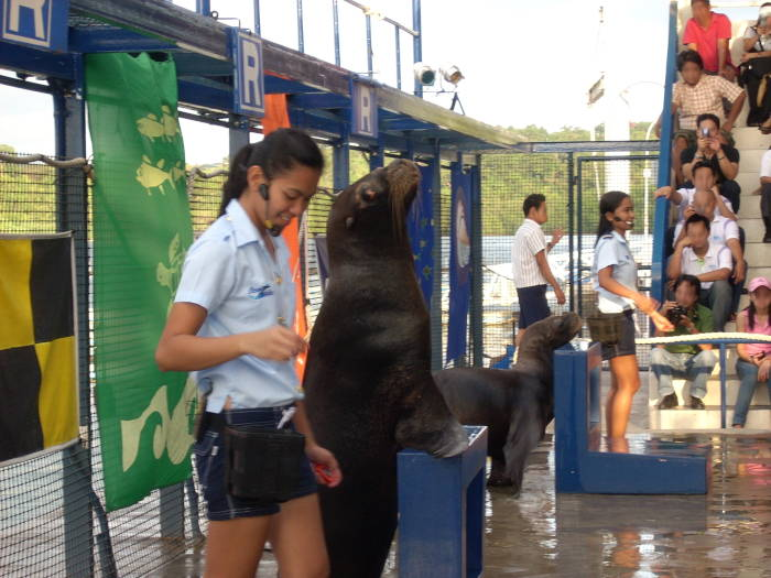 seal_show